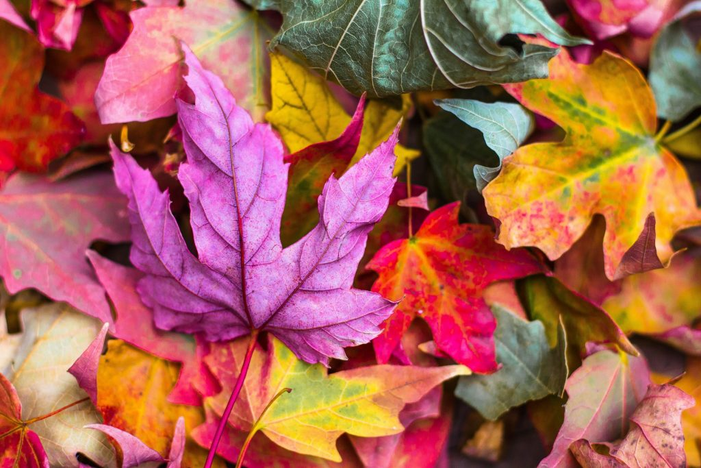 fall energy saving tips - Tim Kyle